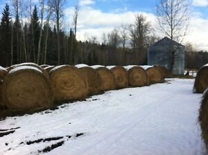 Cow Hay for sale Williams Lake Cariboo Area image 1