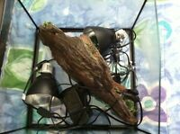 Turtle tank kit for sale