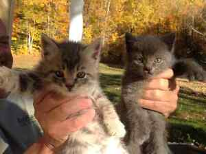 2 chatons à donner