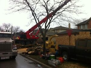 Tip Top Tree Removals and Services Cambridge Kitchener Area image 5