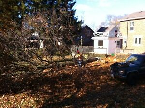 Tip Top Tree Removals and Services Stratford Kitchener Area image 5