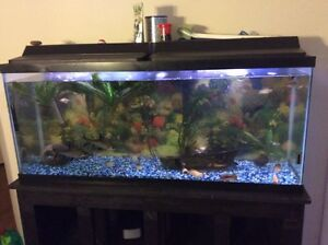 55 gallon tank whole setup with stand