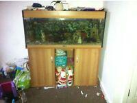 4ft tropical fish tank set up