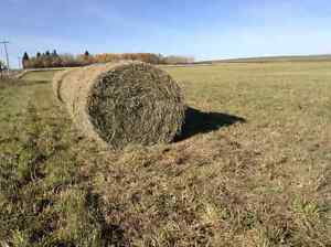 2nd cutting horse hay  bales for sale