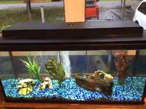 30 Gallon Fresh Water Aquarium with fish and all Accessories