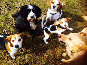 Reliable And Dedicated Dog Walker/Owner in Dt West Toronto