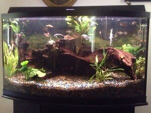 Beautiful 46-50 gal bow fish tank with stand & hood
