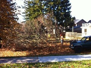 Tip Top Tree Removal and Services Kitchener / Waterloo Kitchener Area image 8