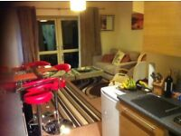 House share , quite professional female required Burton Road lincoln