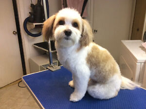 My Pet's Spot grooming and Pet Care London Ontario image 9