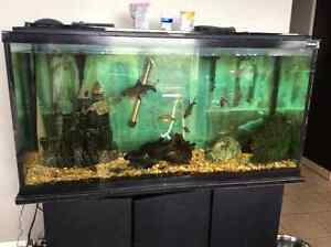 90 gl fish tank with fish