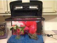 Fish Box 64l tank with accessories