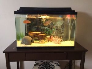 Medium size fish tank for sale with delivery