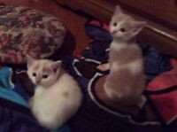 Three kittens to a good home