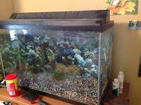 Aquarium - 29 gallon