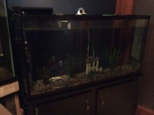 NEED GONE ASAP 75 gallon tank and stand