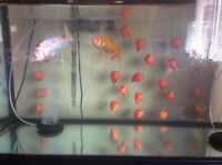 Fish and fish tank And stand $180
