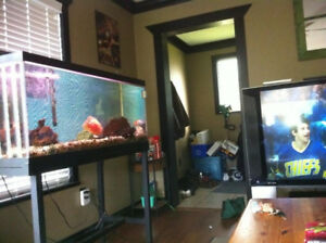 Fish Tank with Stand 80 Gallon