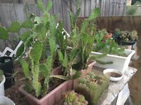 Clearance plant sale, aloe vera, cactus, and more
