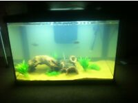 FISH TANK WITH 3 RED BELLY PIRANHAS, 1 COMMON PLECO (CATFISH), HEATER, FILTER, AND OXYGENATOR!