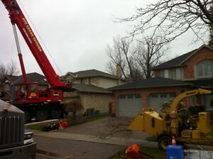 Tip Top Tree Removals and Services London Ontario image 7