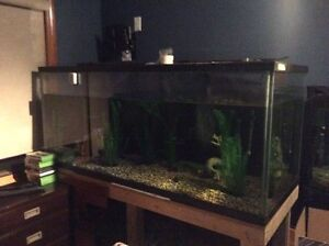 300 gallon fishtank NEED GONE OPEN TO ALL OFFERS!!!!!