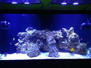 Knowledgeable Aquarist services