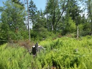 Build or Develop Land 25 Minutes to Halifax, NS! St. John's Newfoundland image 1