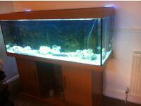 5 foot fish tank jewel