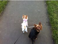FULLY LICENSED AND INSURED HOME BOARDING FOR SMALL/MED SIZE DOGS ONLY