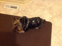 Small Dog Coat in Excellent Condition