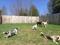 Dog Boarding & Doggy daycare NO Kennels