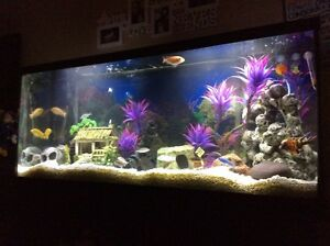 55 Gallon fish tank and accessories aquarium  Cambridge Kitchener Area image 5