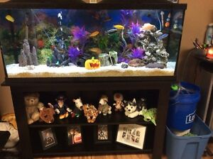 55 Gallon fish tank and accessories aquarium  Cambridge Kitchener Area image 1