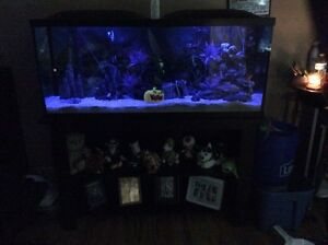 55 Gallon fish tank and accessories aquarium  Cambridge Kitchener Area image 3