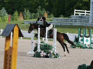 Hunter / Jumper for lease