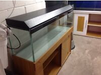 4ft tank and stand, Aquariums for sale, Fish Tank