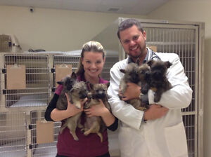 Come FEEL the Difference - Princess & Downtown Animal Hospitals!