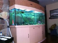 180 gallon curved front fish tank