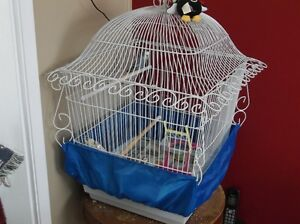For Sale Budgie With Cage