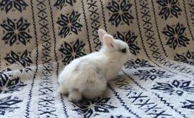 5 beautiful friendly bunny rabbits
