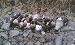 Guided Duck and Goose Hunts Cornwall Ontario image 2