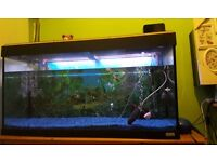 3ft by 2ft tropical fish tank £75