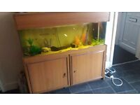 4 foot fish tank and stand plus fish