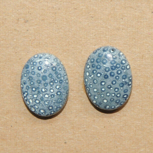 Blue Fossil Coral Cabochons 16x12mm with 5mm dome set of 2 (16808)