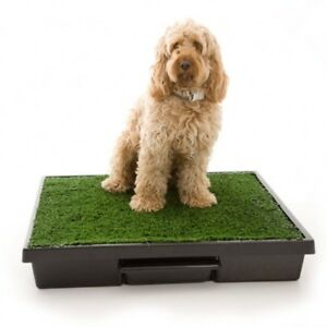 Pet Loo for small dogs
