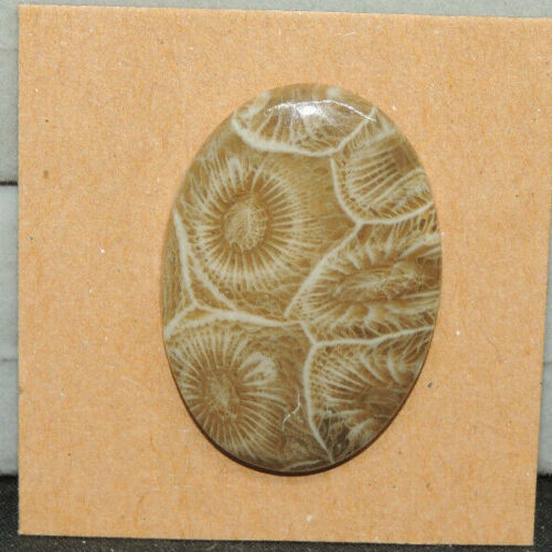 Fossil Coral Cabochon 30.5x21.5mm with 4mm dome (15814)