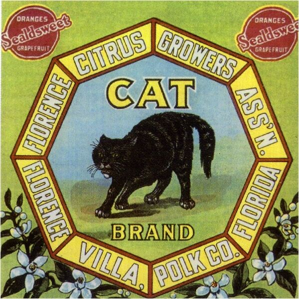 Florida Florence Villa Black Cat Orange Citrus Fruit Crate Label Art Print