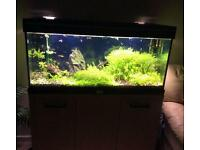 Aquamanta Fish Tank with CO2 set up