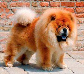 Friendly Dog Walker based just off Hampstead Heath